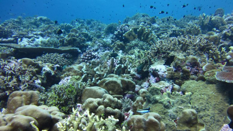 Scientists have developed a way to predict where coral reefs will be most vulnerable to ocean acidification, (Hannah Barkley, Woods Hole Oceanographic Institution)