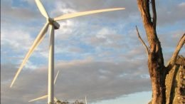 For every one bird killed by a wind turbine, fossil fuel-powered plants kill 2,188 birds. (Photo: David Clarke)