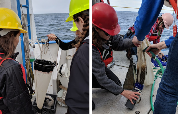 A mesh net (left) is lowered by rope to a shallow depth to gather samples of microscopic phytoplankton, the base of the aquatic food web. A larger version (right) is lowered deeper, by a crane, to gather samples of the larger zooplankton, who sustain the food web for larger animals. Juvenile salmon rely on zooplankton for growth, but ocean acidification is threatening they type of zooplankton salmon need.