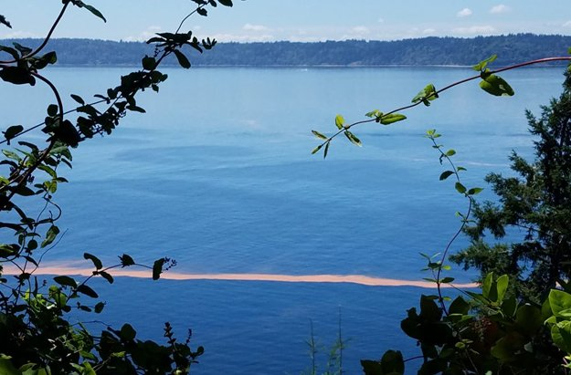 Algae blooms in Puget Sound are common in spring and summer, due to excess nutrients from human and natural sources.