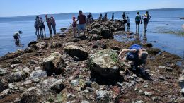 Enquiring minds examine hidden marine life during low tide at West Seattle's Constellation Park