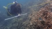 A researcher accesses the damage at Day Reef on the Great Barrier Reef following the March 2016 mass coral bleaching event