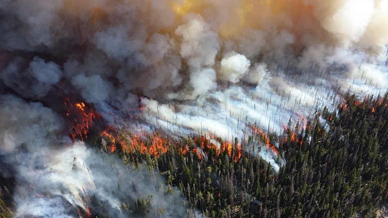 The 2013 Alder Fire (pictured above) in Yellowstone National Park was one of five at the time caused by lightning strikes and fueled by warmer and drier weather and spread by strong winds. Lightning is attributed to 55 percent of burned acreage between 2016 and 2020. In 2020, California's largest fires were caused by lightning.